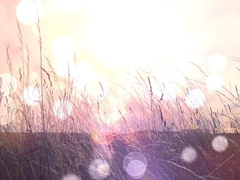 eine Wiese in der Abendsonne